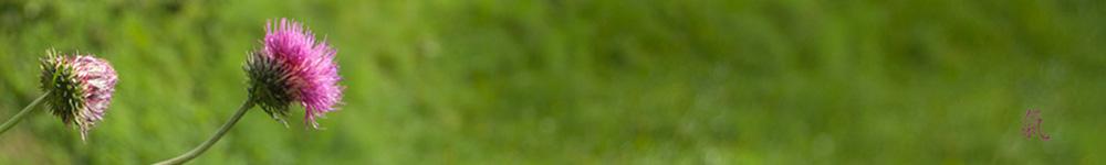 Chiemgau Qigong in Traunstein und Traunreut